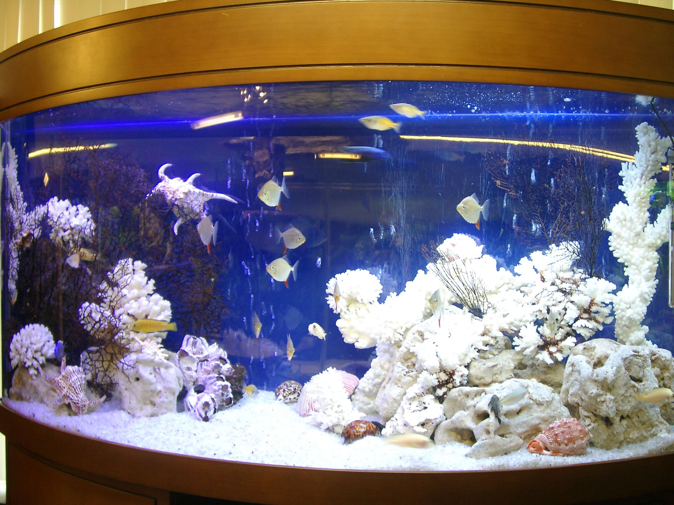 Аквариум дизайн псевдо море