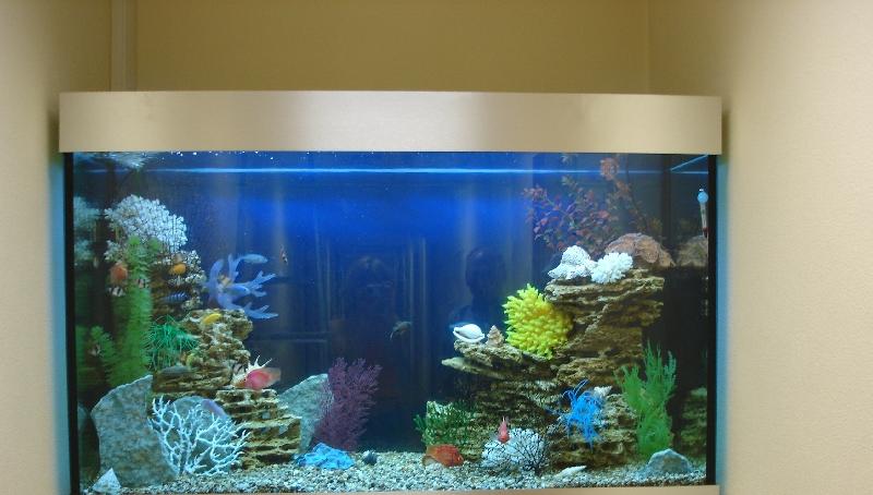 Наша работа аквариум псевдоморе в