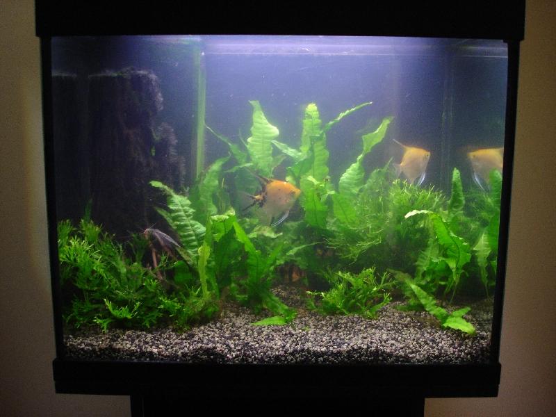 Черный грунт в аквариуме фото