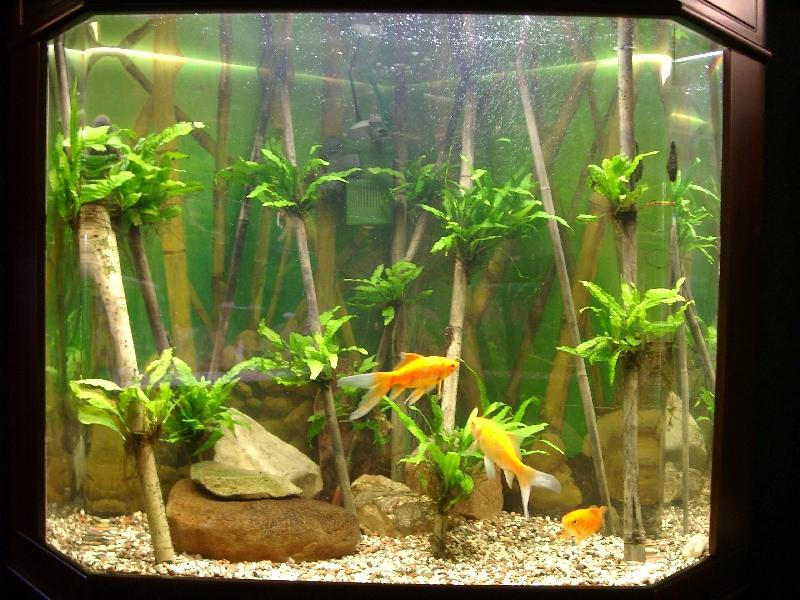 Аквариум с живыми растениями в жилой
