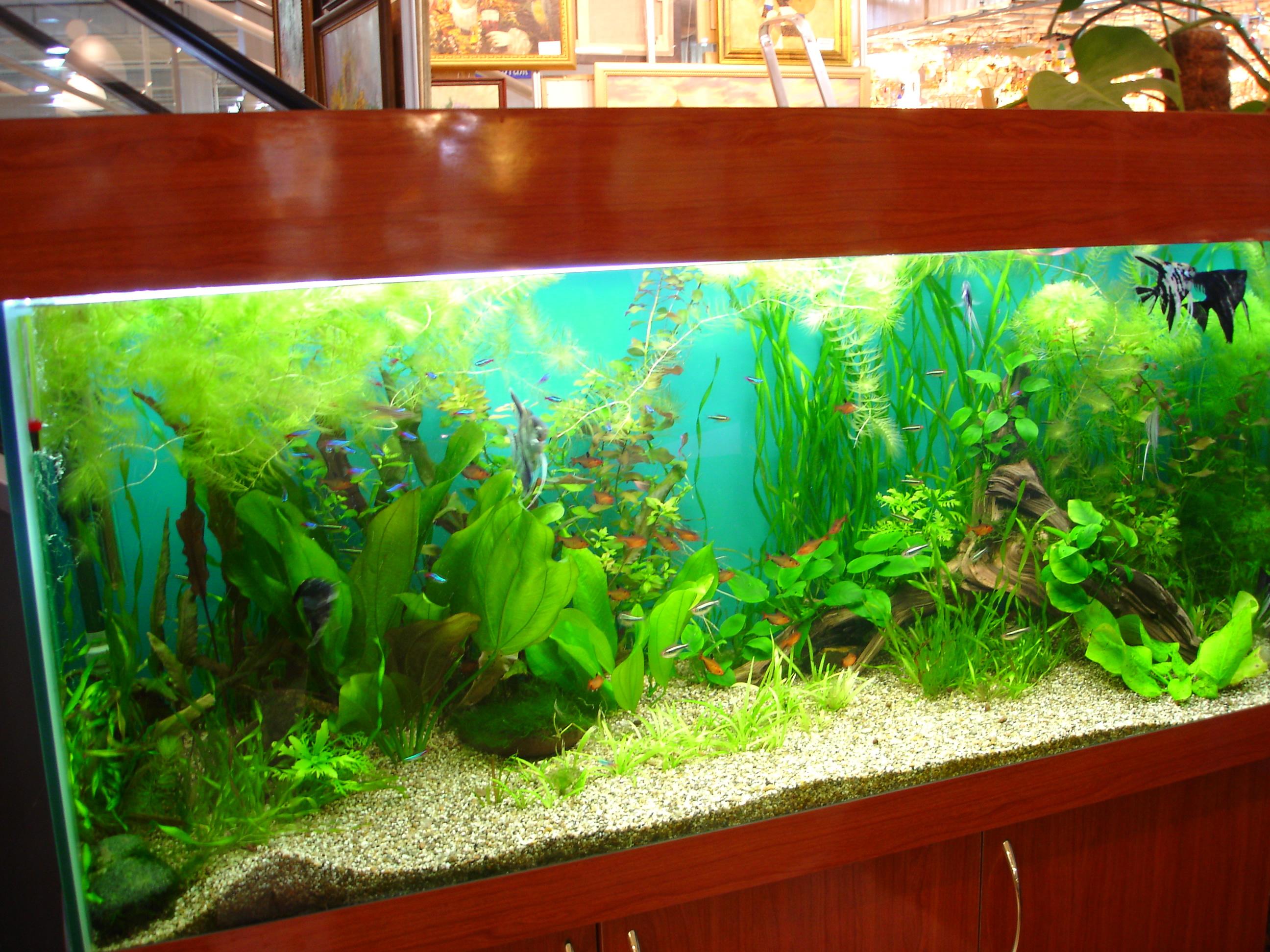 Аквариум с живыми растениями в офисе