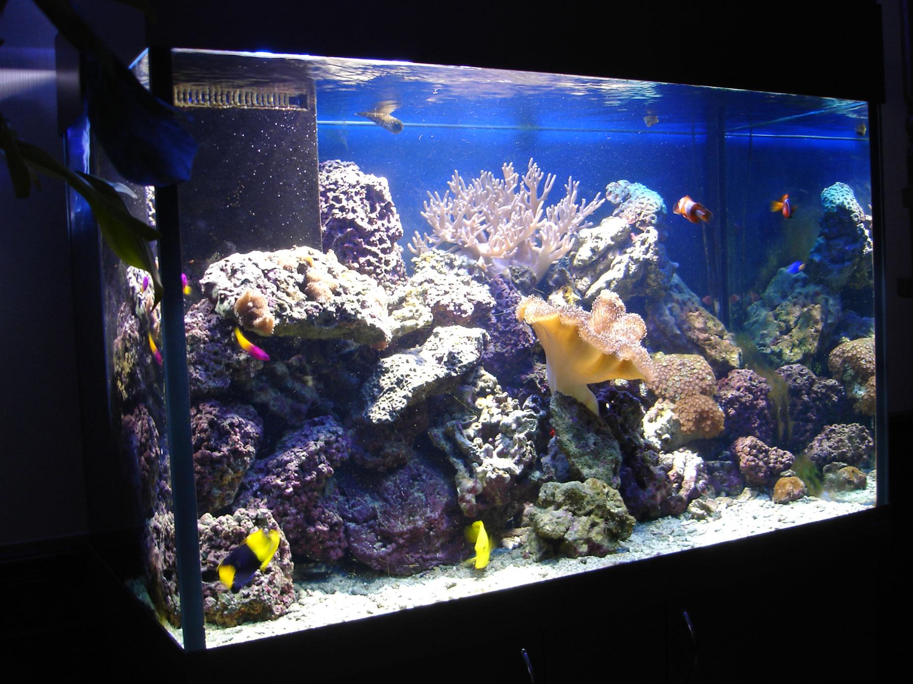Наша работа рифовый аквариум в офисе
